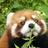 The profile image of Yoshi_nosu