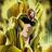 Basile_76's avatar'