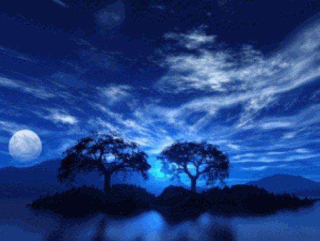 月を待つ木々