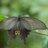 tdlbutterfly