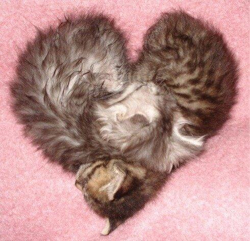 かわいすぎる猫 画像BOT