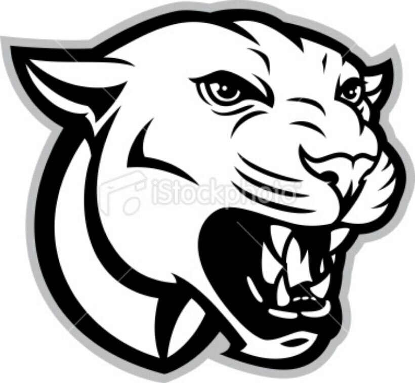 Cougar Face Line Drawing : Hazleton area cougar hahscougar twitter