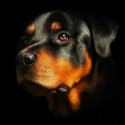 Black And Orange Dog Breed