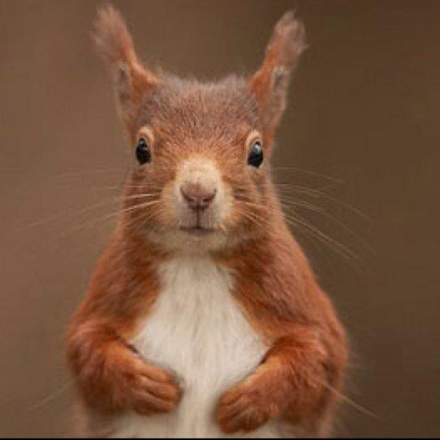 Cheeky Squirrel (@NicoleKent1) | Twitter
