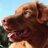 Jennifer Coulter - avalanchedog