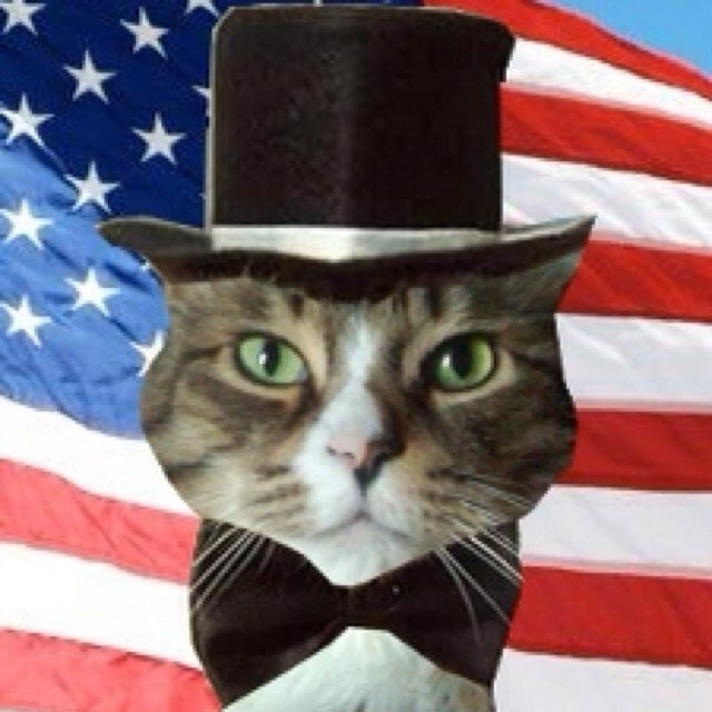 Top Conservative Cat Social Profile