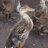 Jonathan Drake - Duck_person