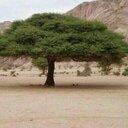 ابوعلي (@0506007312) Twitter