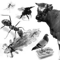Fora & Fauna