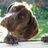 HappyhoundsB