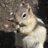 Suzy Espley (@ZesperS) Twitter profile photo