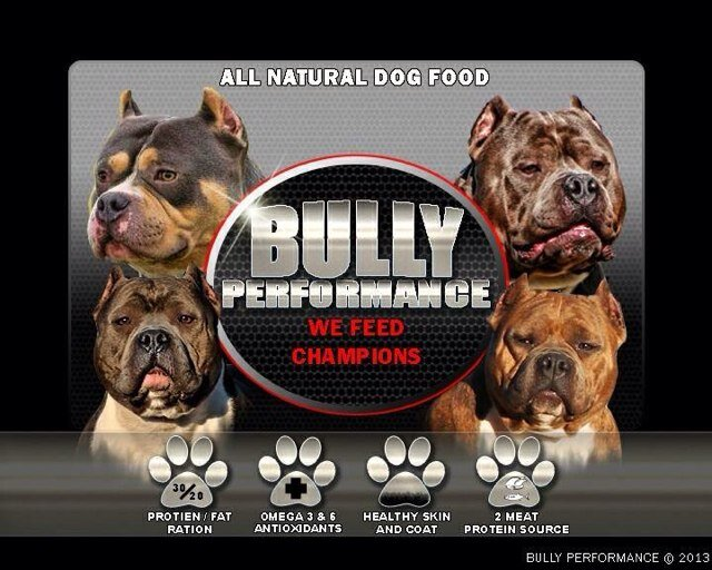 bully performance dog food