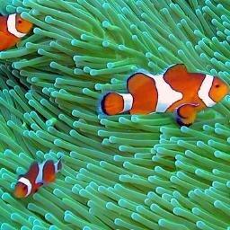 Clownfish06 Clownfish06 Twitter