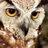 wildlife_ranger