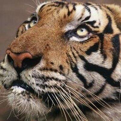wonderful animals voiceforanimals twitter rh twitter com