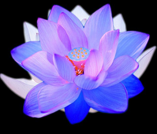 blue lotus clinical bluelotusbeauti  twitter, Natural flower