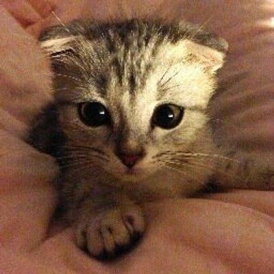 Résultat de recherche d'images pour gatos tiernos