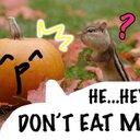 かぼちゃ (@02S2y) Twitter