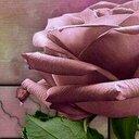فاتن الفهد ♥ (@11Fahad1995) Twitter