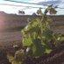 Drayton's Wines Profile Image