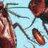 bugs______