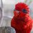 @rubylorikeet Profile picture