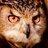 @bushbark Profile picture