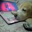 @indhi123 Profile picture
