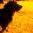 Bart1705 avatar