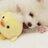 mahomies always twitter profile