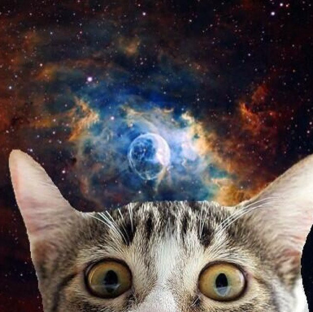 Cats In Space (@SpacialCats) | Twitter