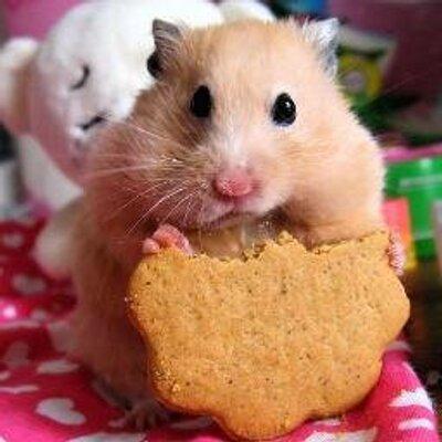 hamsterporn