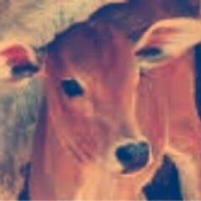 animal rights in india Animal welfare board of india (ministry of environment, forest and climate change, government of india) national institute of animal welfare campus po 42 km stone, delhi-agra highway, nh-2, village-seekri, ballabhgarh, faridabad , haryana-121 004 india.
