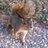 Squirrels of UA