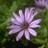 gjmore's avatar