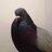 @graycityparrot Profile picture