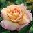 May Rose