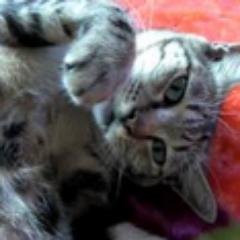 cat worker 123