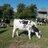 Brinkworth Dairy