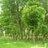 Int'l Treescape
