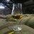 Old whisky news