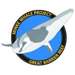 Minke Whale Project Friday Photo Bento With Bent Dorsal Fin Perhaps The Most Famous Dwarf Minke Whale In The Greatbarrierreef T Co Bmwqqjrgek