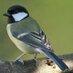 @BirdWipe
