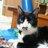 のら猫 (@noraneko22)