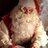 Joulupukki's Twitter avatar