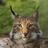 EsenSemo's avatar'