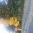 Leigh Tobes