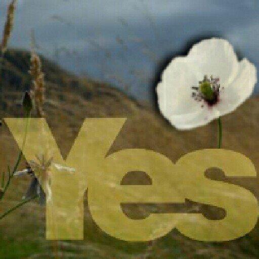 scot_indy_2014
