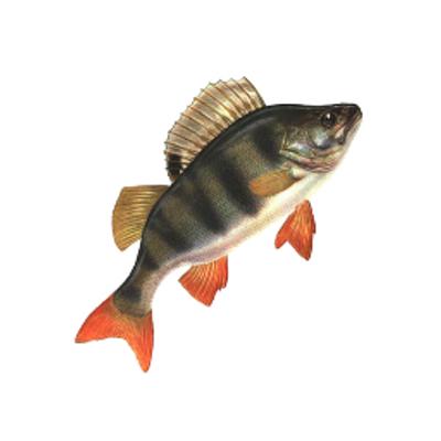 прогноз рыбалки в похвистнево