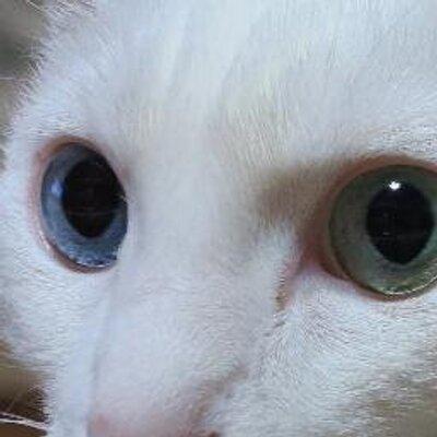 へたれ猫プーの『もふもふ案内所』 @__P_o_o_h__